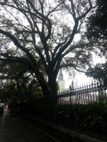 Mossy Trees Jackson Square