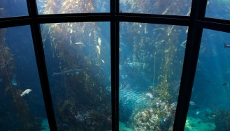 Kelp Forest at the Monterey Bay Aquarium