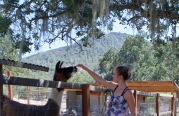 Cousin and Resident Llama